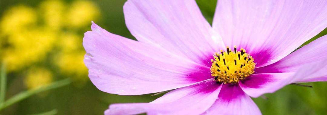 Floriterapia pratica moderna